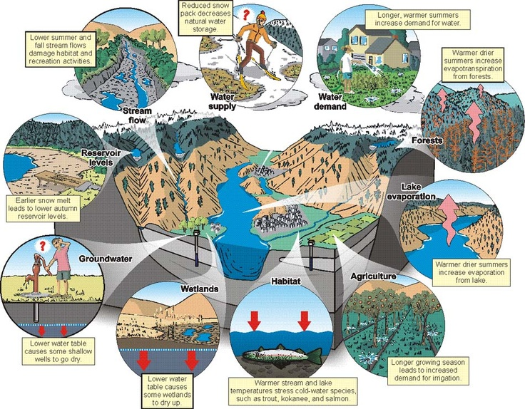 cause and effect of forest depletion Some of the negative effects of groundwater depletion: drying up of wells the basic cause of land subsidence is a loss of support below ground.