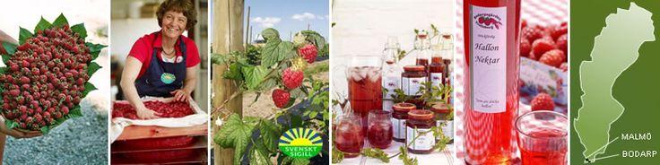 Hallongården   The raspberry farm in Bodarp