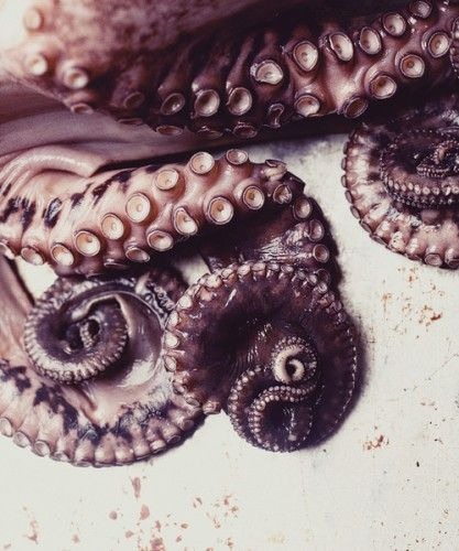 Tentacles. good to eat? good to touch? or just good to see?