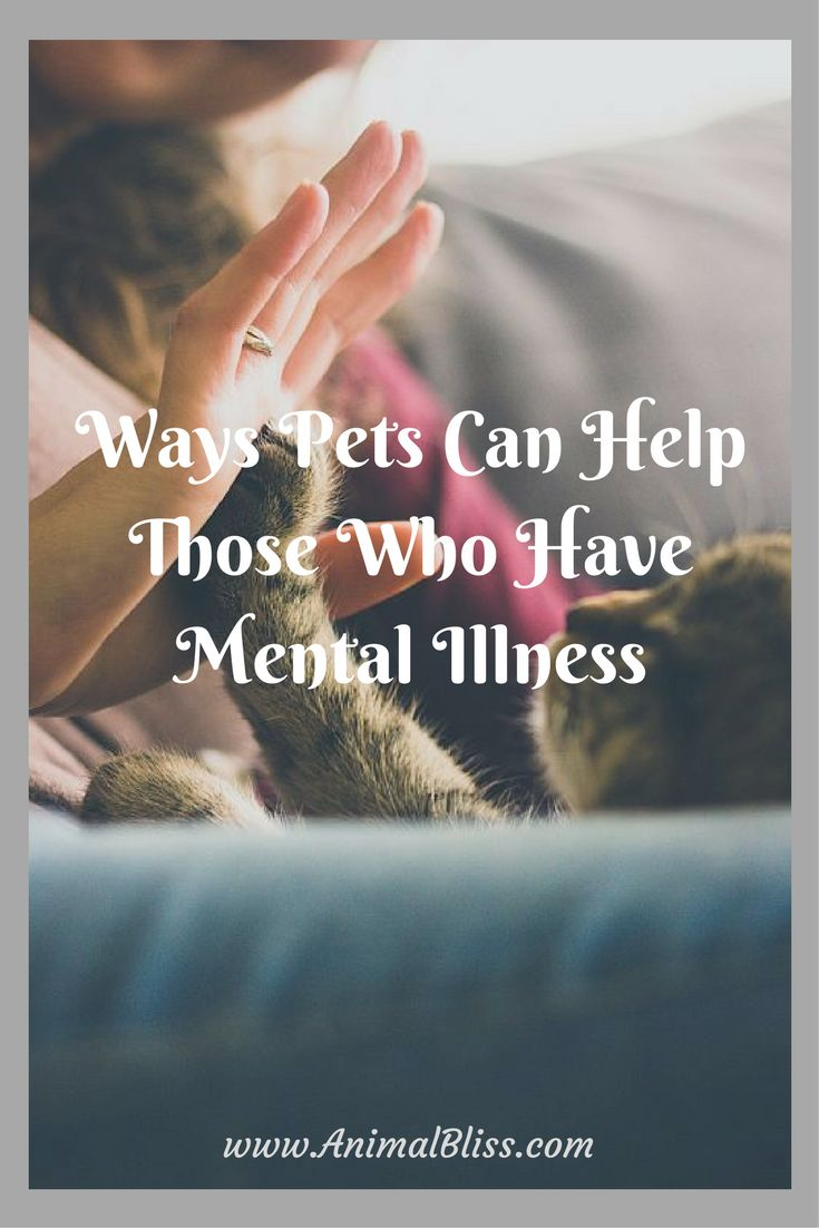 Did you know pets can help those who have mental illness? Pets can help alleviate some of the pain that is constant in their lives. Read more.