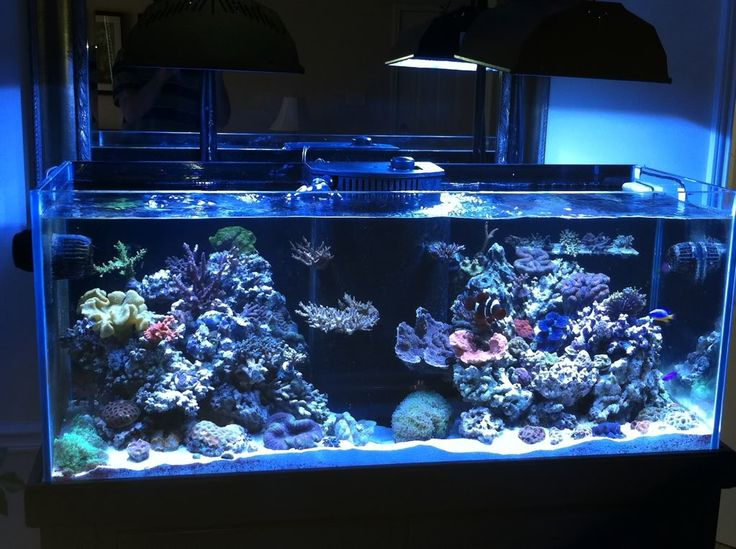 37 best shallow reef tank images on pinterest fish for Deep blue fish tanks