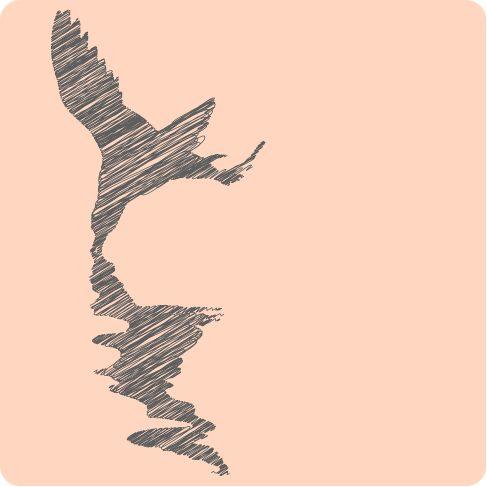 #Tern #Bergfrida #vector #tojudvikling