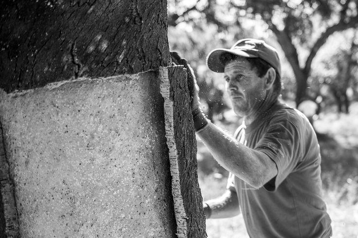 Photographer: Jorge Sarmento  Organization: APCOR (Portuguese Cork Association)  Exhibit Title: Cork extraction in North Alentejo (Portugal)  Location: North ALentejo, Portugal