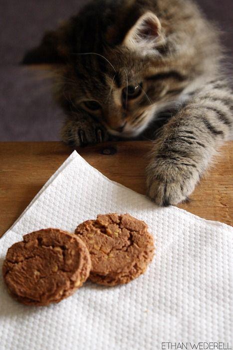 .: Funny Animals, Kitty Cats, Cuteness, Adorable Animals, Adorable Style, Cats Miao, Adorable Cats, Cat Stuff, Gatos Katzen Cats Chats
