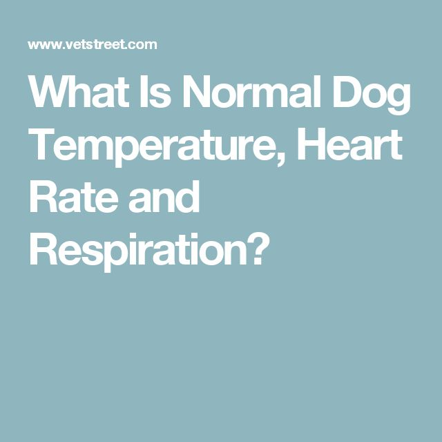 What Is Normal Dog Temperature, Heart Rate and Respiration?