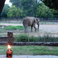 Set in the Bloemfontein Zoo , Protea Hotel Willow Lake is a child's paradise