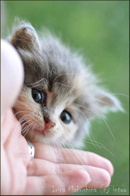 Хорошем качестве, фото с котятами с надписями