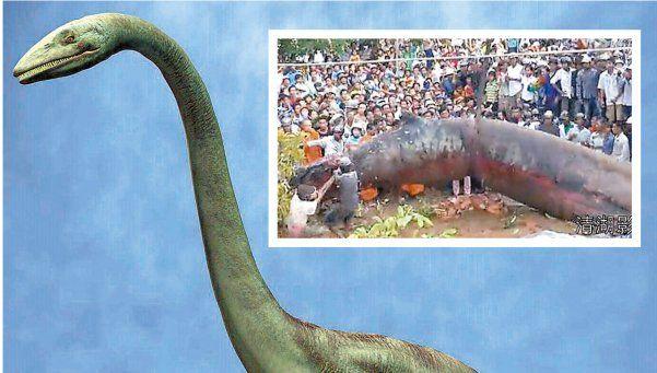 Hallan gigantesco monstruo marino. La criatura fue encontrada en Vietnam, en un bosque en una zona alejada al mar. Nadie sabe de qué animal se trata http://www.diariopopular.com.ar/c176570