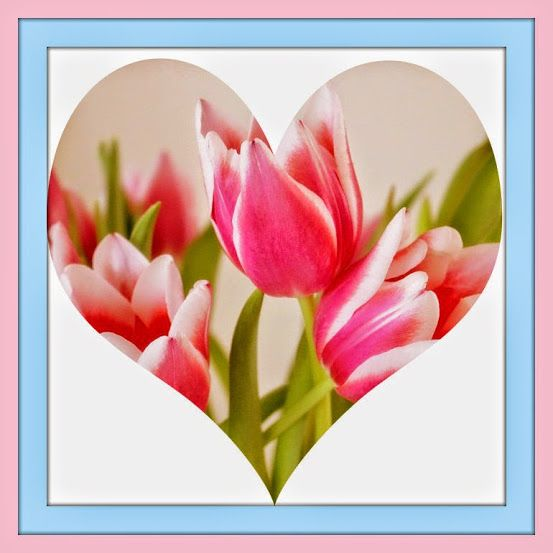Valentine´s Day Tulip Card    Edited by Picasa3, Paint and PSE  https://lh4.googleusercontent.com/-XKc0SliL0ao/VN_KIDQhm-I/AAAAAAAAdHI/mRsb5j2teQs/s553-no/Tulips%2BPink%2B2%2B-%2BEdited%2Bby%2BPicasa3%2Band%2BPSE%2B2.jpg