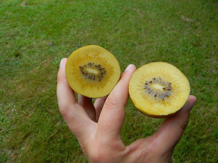 Kiwi Seeds ★ GOLDEN SUPER SWEET ★ Large Kiwi Berries ★ GMO FREE ★ 25 Seeds ★