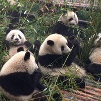 Photo taken at Chengdu Research Base of Giant Panda Breeding by Juju B. on 4/2/2013