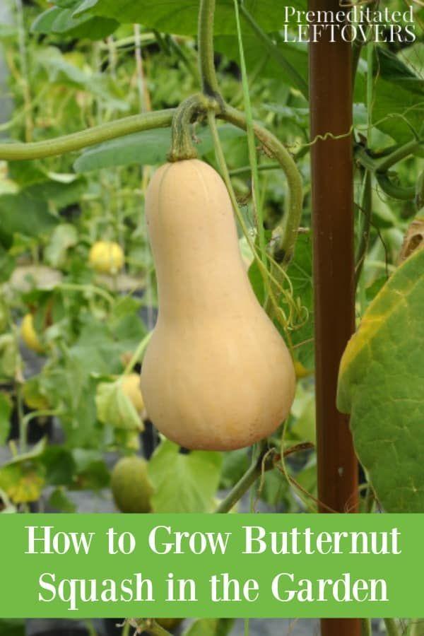 Pin On Gardening Tips From One Determined Gardener