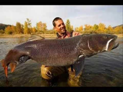 how to catch monster brown trout