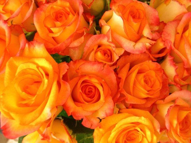 """Casamentos em dias de calor na primavera e no verão podem ter decoração com arranjos caprichados e """"em conta"""". Flores da época são mais baratas e não fazem feio na cerimônia ou na recepção. O UOL selecionou sugestões de R$ 5 a R$ 40 para você escolher"""