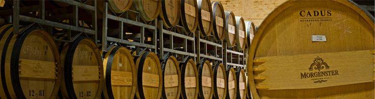 Morgenster Wine & Olive Estate in Somerset West: Wine & Olive Estate and Nursery