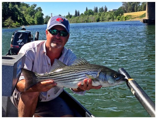 Fly Fishing Specialties: Northern California Fly Fishing Report – June 2, 2...