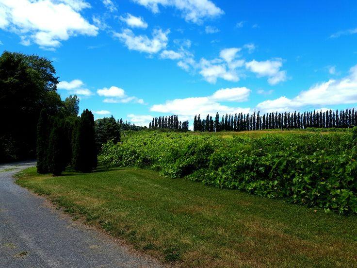 Seigneurie de l'île d'Orléans & Hildegard. #garden #jardin #nature #îledorleans #Quebec @seigneurieiledorleans