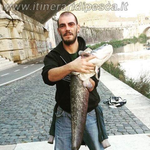 Spinning al centro di Roma con cattura di un siluro a spinning pesca fishing