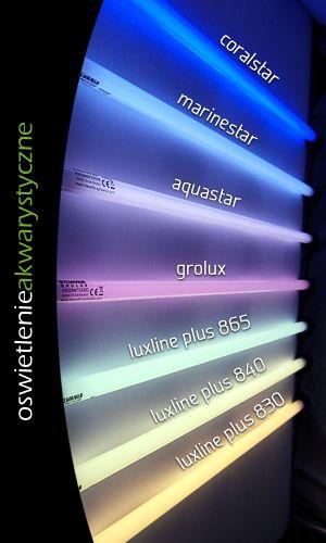 Znalezione obrazy dla zapytania akwarium światło jarzeniówki barwa
