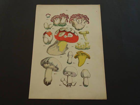 MUSHROOMS print 1884 old botanical illustration of mushroom
