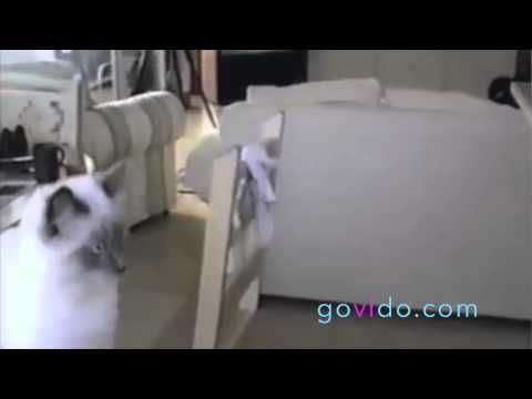 Best Funny Animal Videos ::: Cat ::: Why I don't like toasters ::: Visit us on www.govido.com to find THE FUNNIEST ANIMAL VIDEOS 2014 Funny Videos, Funny video 2014: cat, cats, dog, dogs, funny dogs, sweet dogs, animal, cute, pets, funny animals, puppies, PLUS: monkey, frog, kangaroo, buffalo, deer, bear, fish, ... and more! Hilarious short videos to make you laugh! :::