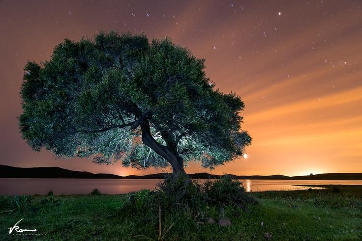 Lightpainting sobre el árbol para esta larga exposición. Las líneas formadas por las nubes altas parecen destellos del propio árbol.