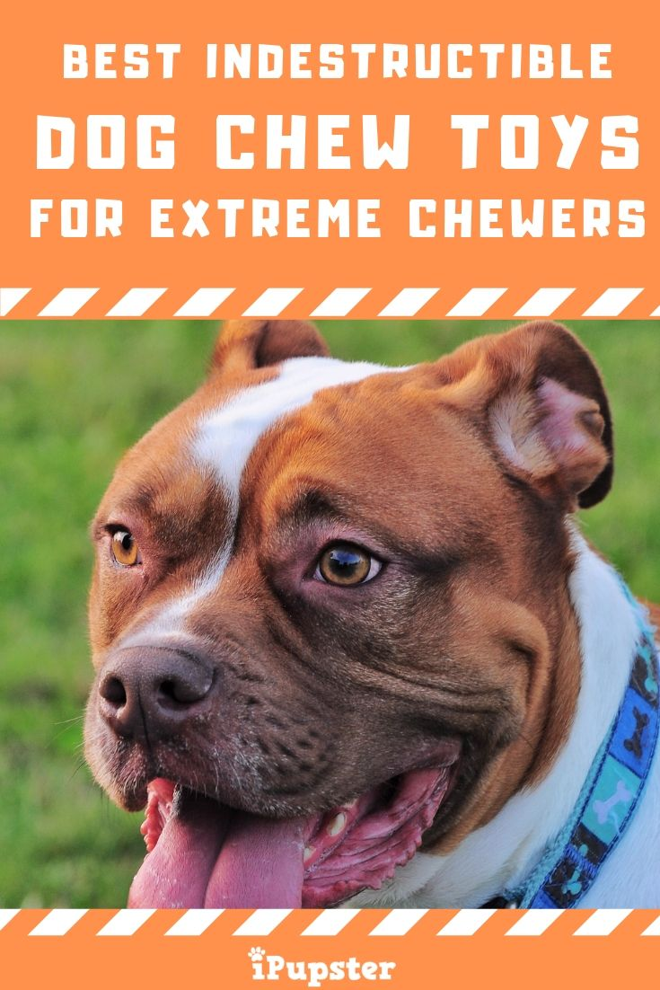 The Best Indestructible Dog Chew Toys For Aggressive Chewers