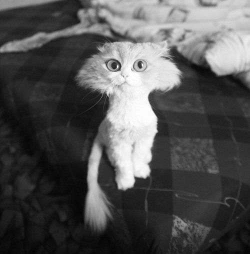 One day I'm going to own a fluffy cat and give it this hair cut. Free laughter for months.