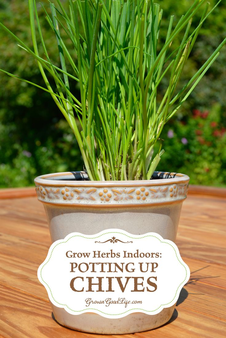 1336 best images about gardening tips on pinterest herbs crop