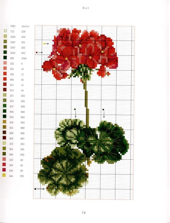 Gallery.ru / Фото #17 - Flowers The Geraniums - ORANGE-POINT