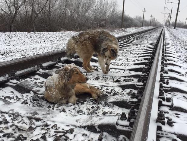 В Ужгороде пес Панда 48 часов самоотверженно охранял раненую собаку Люси http://joinfo.ua/sociaty/1191579_V-Uzhgorode-pes-Panda-48-chasov-samootverzhenno.html