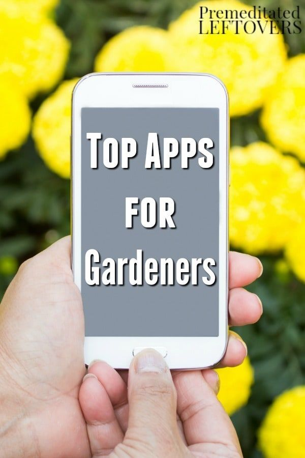 62 best images about Top Gardening Tips on Pinterest ...