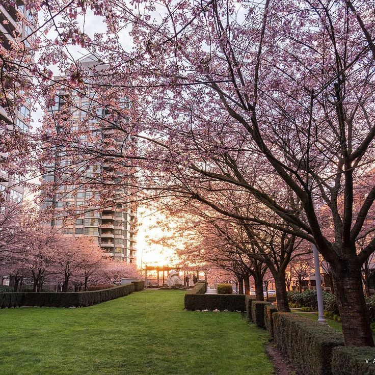 """via inside_vancouver on instagram """"Happy first day of spring!  