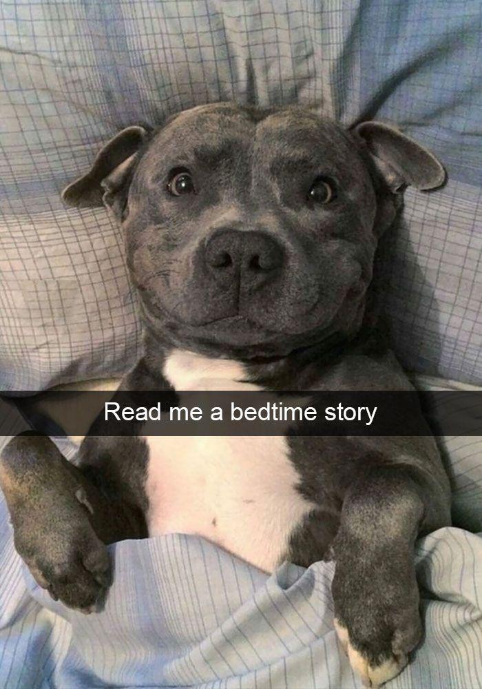 166 lustige Snapchats mit Hunden, über die man unmöglich lachen kann (Teil 2)