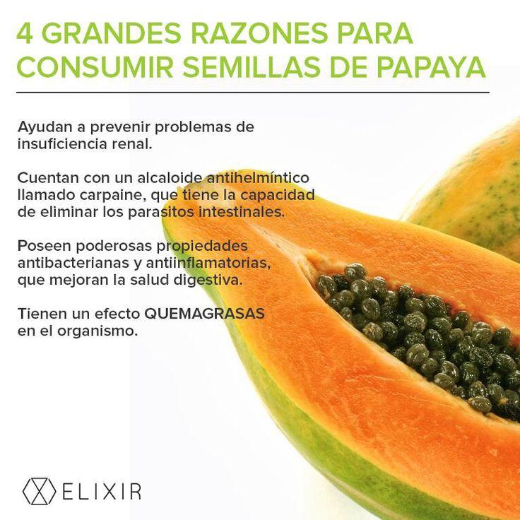 Semillas de papaya | Lugares para visitar | Pinterest