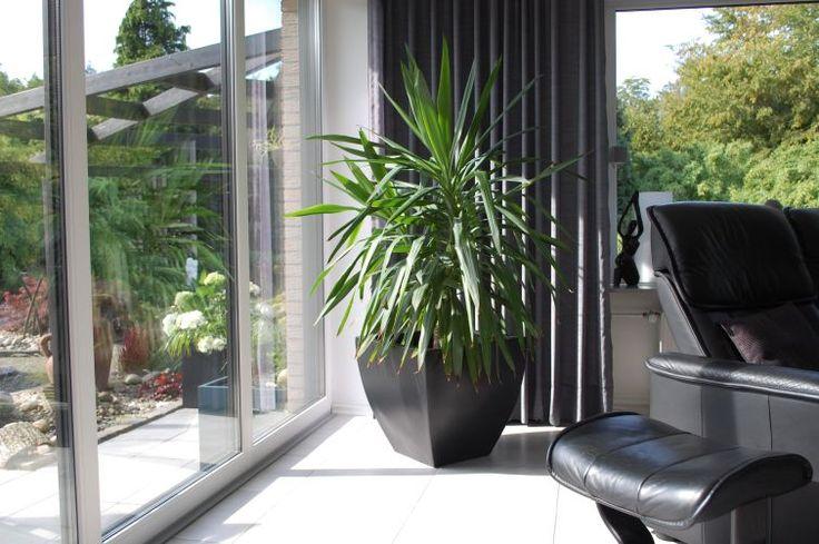 Pflanzkübel / Blumenkübel Fiberglas in Anthrazit mit Palme im Wohnzimmer. Hübsche Dekoration. Weitere Pflanzkübel aus Fiberglas finden Sie unter https://www.vivanno.de/pflanzkuebel/materialien/fiberglas/