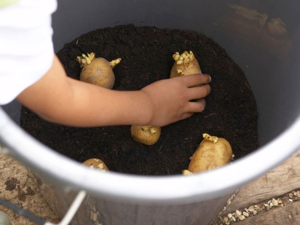 How to Grow Potatoes in Pots --> http://www.hgtvgardens.com/potatoes/how-to-grow-potatoes-in-pots?soc=pinterest