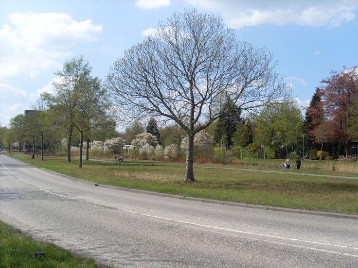 Voorjaarsplaatje vanaf de Eikenlaan in Hoogeveen. Is aan de zuidzijde van Hoogeveen nog net aan de oostkant van de A28.
