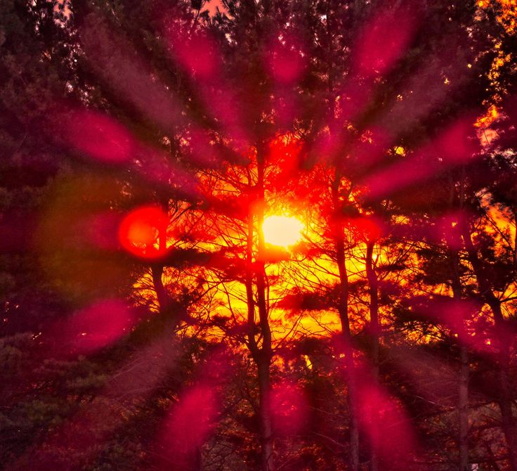 Sun through the trees with lens flare.  - by Tony Karp – http://timuseum.com