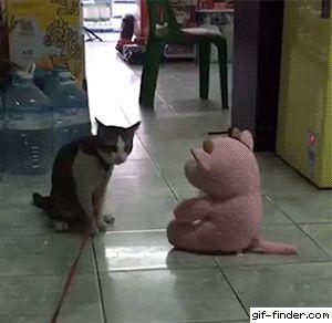 Cat Body Slams Pig Toy
