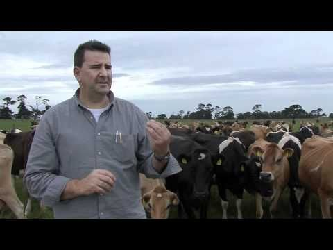 In this video hear from Aussie Farmers #Dairy CEO Peter Skene and learn about their new #milk production facility in #Camperdown, the heart of dairy #farming country.