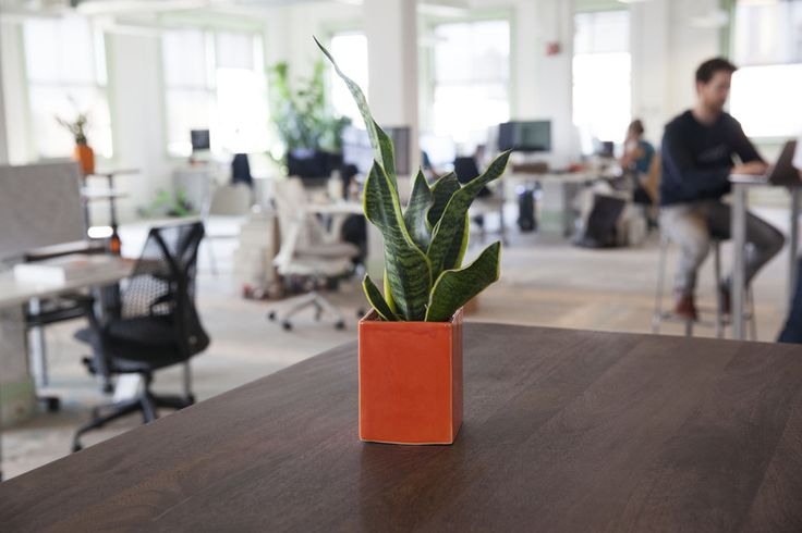 Spring is in the air!  Theory of Place is a huge proponent of smothering your office life with  vegetation. So naturally, we caught up with The Sill to find out more about  their spring Table Top Picks. If you're like me and have allergies so  motivated your nose can run a marathon, The Sill even suggests some plants  to filter indoor air pollutants. Keep reading for tips and styling tricks  for this spring's most popular office plants!  Be sure to stop by and say hello in their brick and…