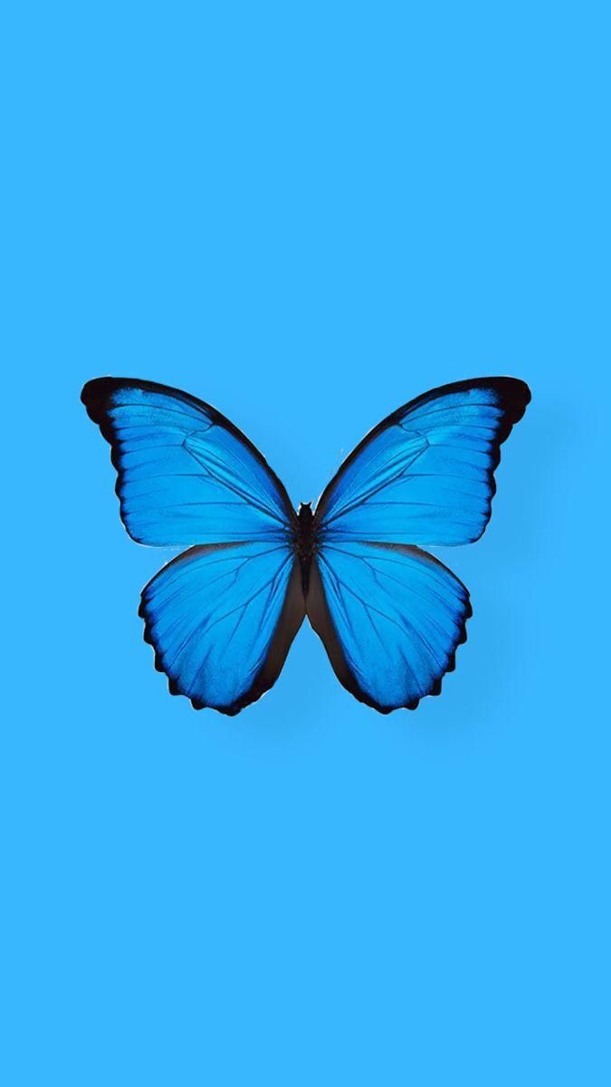 Blue Butterfly 🦋 | Cute emoji wallpaper, Iphone wallpaper ...