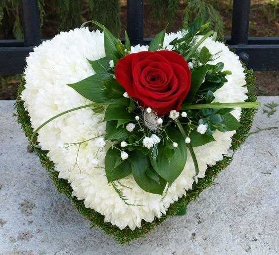 Red rose on white Floral heart