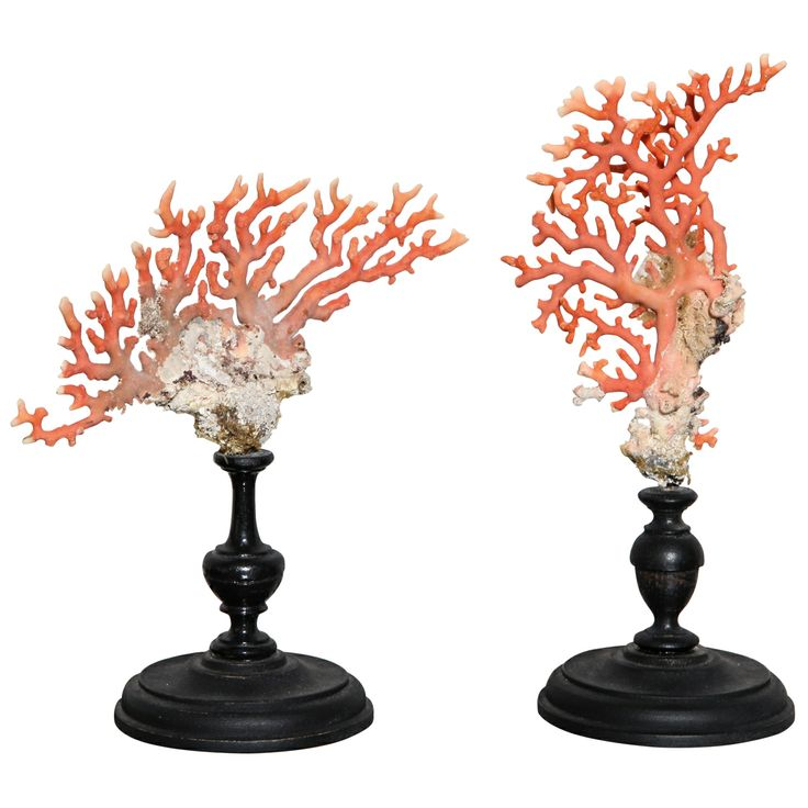 Small Corals | From a unique collection of antique and modern decorative objects at http://www.1stdibs.com/furniture/more-furniture-collectibles/decorative-objects/