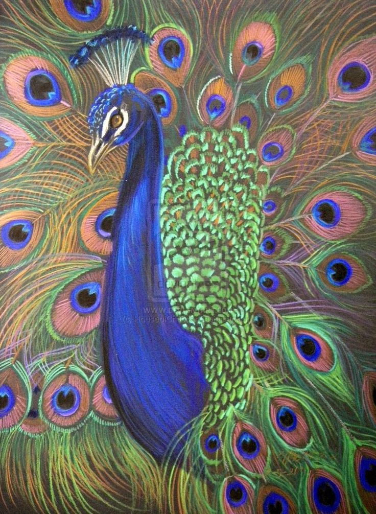 peacock art images | Peacock Prismacolor 2 by HouseofChabrier on deviantART