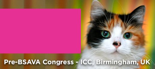 International Cat Care | Passionate about cats