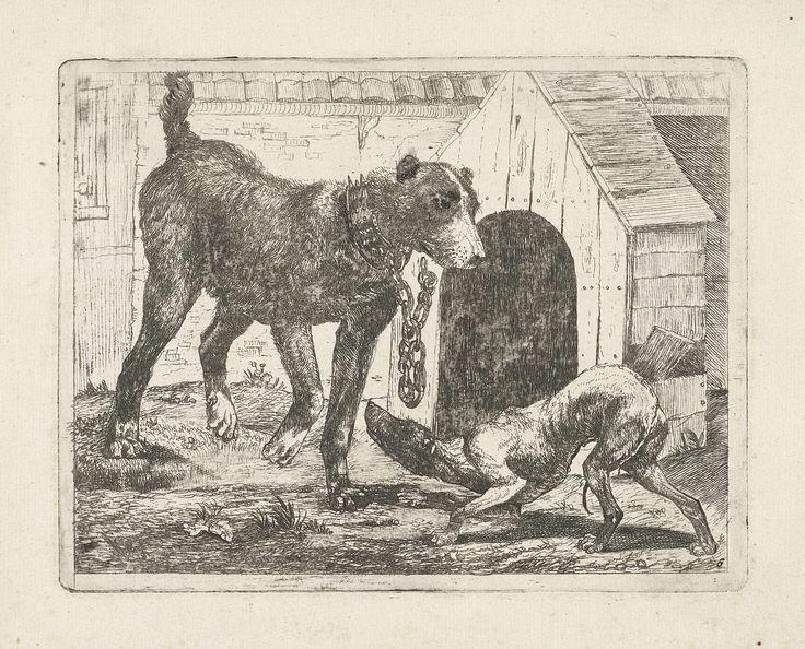 Pauwels van Hillegaert | Hond aan een ketting, Pauwels van Hillegaert, 1654 | Twee honden waarvan een aan een ketting voor een hondenhok. Zesde prent van een serie van acht prenten met voorstellingen van honden.