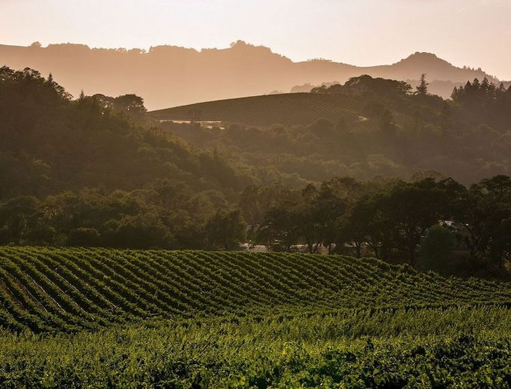 The site of California's earliest planted vineyards, Sonoma Valley is rich in both history and legend.