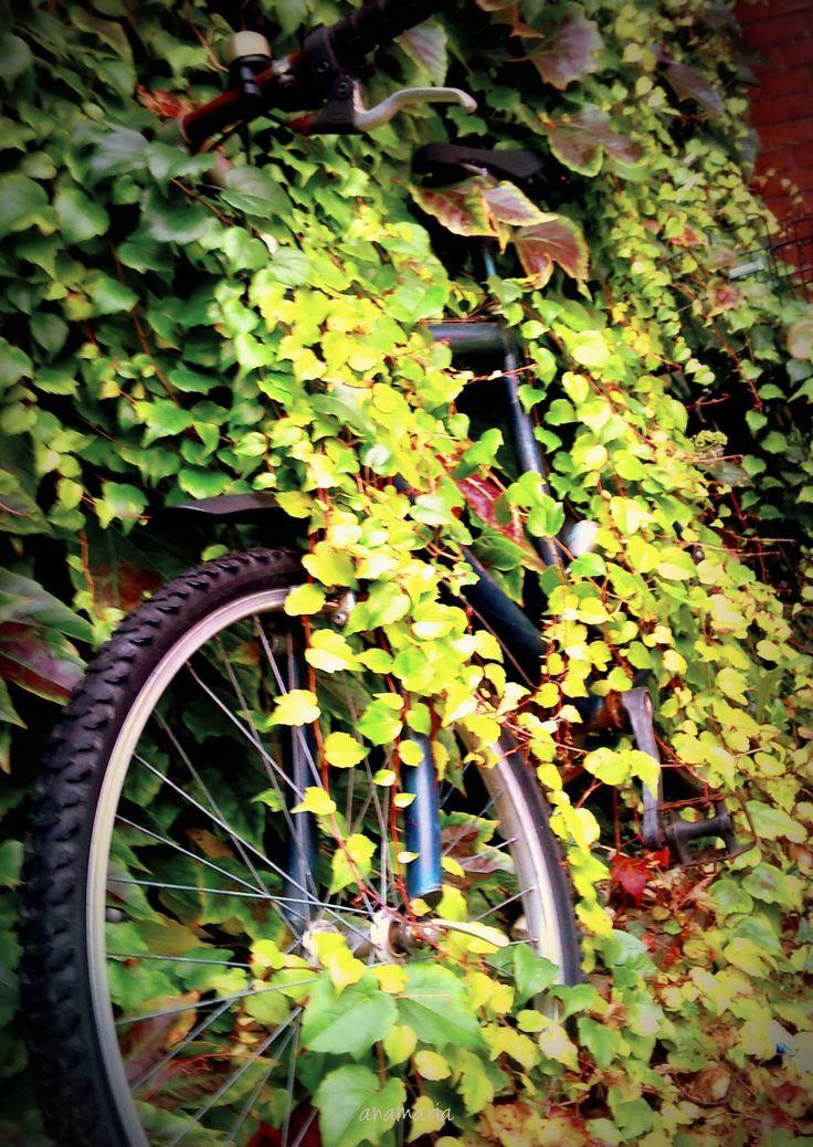 Sleeping Bike, somewhere in Münster, - #Muenster | Münster ♥ Muenster | Pinterest | Bike, Bicycle and City